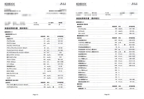 501ハロ血液検査.jpg