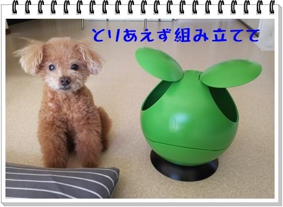 なんでもハロ(2).JPG
