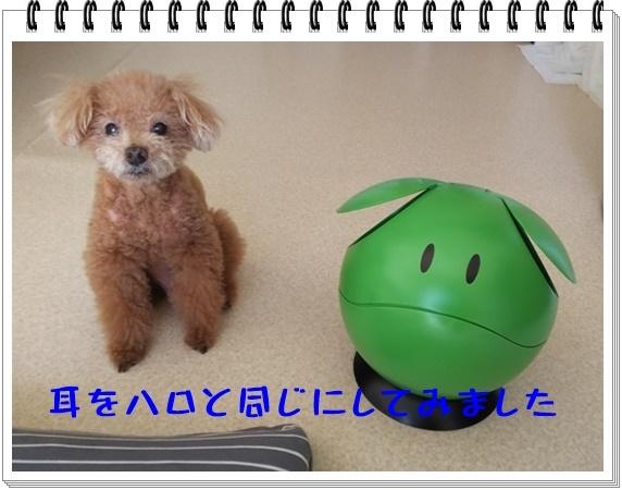 なんでもハロ(3).JPG